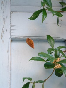 Photo of a suspended leaf