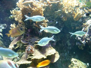 Photo of coloured fish
