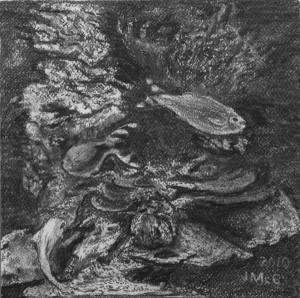 Charcoal drawing of fish